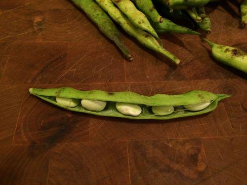 Open bean